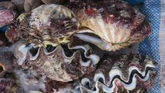 Ốc tượng là món hải sản nổi tiếng nhất ở Lý Sơn. Ảnh: backpacking365days