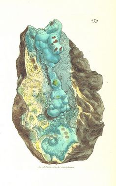 Image taken from page 322 of 'British Mineralogy: or coloured figures intended to elucidate the mineralogy of Great Britain. By J. Sowerby (with assistance). F.P'