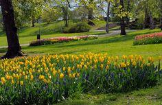 Park on the hill of the observatory in Helsinki - Tähtitorninvuoren puistossa kaartelevat käytävät [Vladimir Pohtokari]