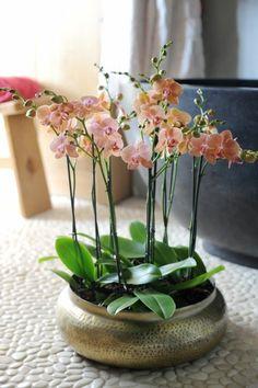 comment faire refleurir les orchidées pour bien decorer chez soi