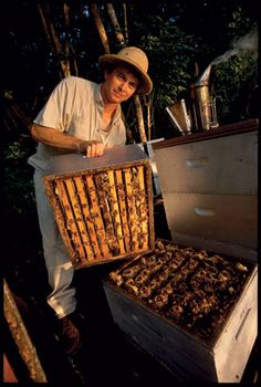 Wewahitchka is the home of one of Florida's largest beekeeping operations, where for more than a century, beekeepers have harvested world famous Tupelo Honey from the Apalachicola River Basin. Third generation beekeepers, the L.L. Lanier family, inspired the movie Ulee's Gold.