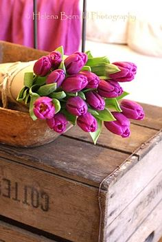 so love tulips...