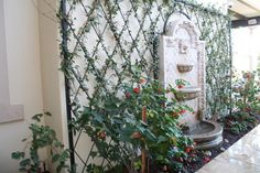 An iron lattice is placed against a large open section of facade, and roses are trained to grow over each section. The result is a flaming display of roses around an elegant water fountain.