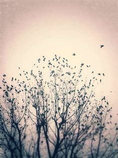 24.stormi d'uccelli neri, com'esuli pensieri... | Sensazioni d'inverno | 7705 elisa | Scrivere e pubblicare gratis online poesie, racconti, condividere fotografie e grafica - Sito e blog Rosso Venexiano -