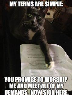 funny cat memes - Buscar con Google