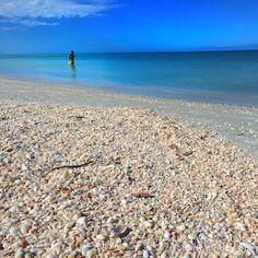 seashells and salty air
