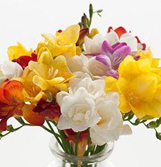 Krok po kroku – Złota rączka – Zrób sobie oświetlenie do fotografii kwiatów i przedmiotów, czyli okno na świat