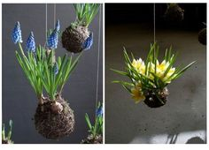 Kokedama – Japanese String Gardens.  Posted on January 17, 2012 by Robin  I couldn't believe my eyes when I came across such an amazing concept.  Kokedama – Japanese String Gardens!!  Artist and Botanist, Fedor Van der Valk, has designed a vast series of String Gardens.  Just in time for all the spring bulbs that are out right now, these hanging plants are such a beautiful and serene display.