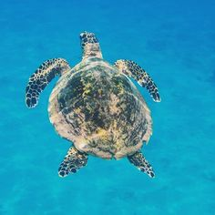 Spotted by our marine conservation volunteers while out on a snorkel around Curieuse Island! Marine Conservation, Volunteers, Seychelles, Snorkeling, Kenya, United Kingdom, Thailand, Mexico, Island
