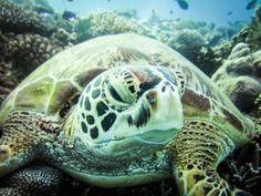 Elizabeth E II Great Barrier Reef QLD Australia