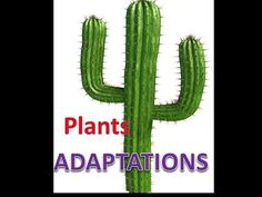 Plant Adaptations Lesson with Quiz - YouTube