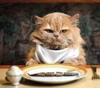 """Paso 8 de 8 - <p>Es importante que conozcas los <a href=""""http://animales.uncomo.com/articulo/cuales-son-los-alimentos-toxicos-para-los-gatos-19042.html"""">alimentos tóxicos para los gatos</a> a fin de no proporcionarlos ni dejarlos a su alcance. Puesto que pueden contraer <a href=""""http://animales.uncomo.com/articulo/cuales-son-las-enfermedades-mas-comunes-en-los-gatos-domesticos-21783.html"""">enfermedades</a> graves que pongan en peligro su vida. </p><p>Imagen: mundogatos.com</p>"""