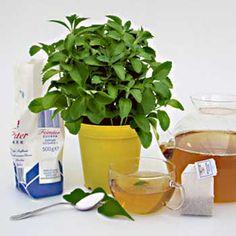 Sladká tráva Stévia Korn, Stevia, Herbs, Garden, Plants, Garten, Lawn And Garden, Herb, Gardens