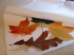 Drying Fall Leaves in the Microwave