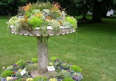 It's the bird bath turned succulent bath - I am going to do this!