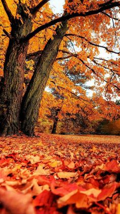 Customize your iPhone 5 with this high definition Nature wallpaper from HD Phone Wallpapers! Iphone Wallpaper Herbst, Nature Iphone Wallpaper, Wallpaper Backgrounds, Fall Wallpapers For Iphone, Fall Backgrounds Iphone, Wallpaper Samsung, Phone Wallpapers, Cute Fall Wallpaper, Fall Leaves Wallpaper