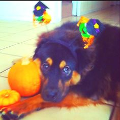 Brody bear <3 in Halloween spirit