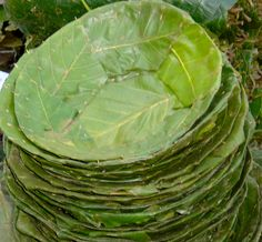 banana leaf disposable plates and bowl - Google Search