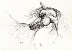 Arabian Horse Drawing 2013 09 13 Drawing by Angel Tarantella - Arabian Horse Drawing 2013 09 13 Fine Art Prints and Posters for Sale