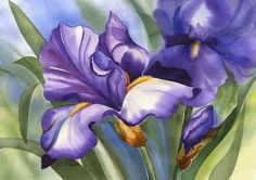 purple iris watercolor | Drawing | Pinterest