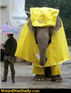 Raincoat elephant - random cool