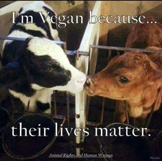 #vegan Don't drink milk-don't kill calves