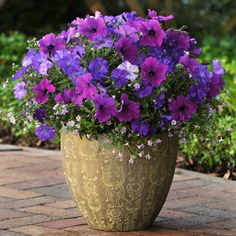 Fuseables Healing Waters is a blend of Shock Wave Denim petunia, Easy Wave Violet petunia, and large flowered blue bacopa.