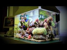 Nano Reef Tank 25 Gallon (Canon EOS 550D Video Test) - YouTube