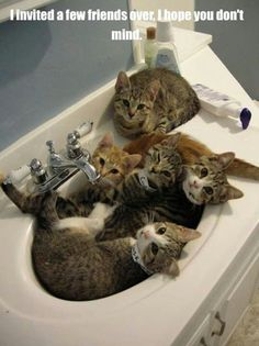 Cats and sinks...