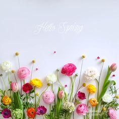 Free Spring Desktop Wallpaper x Pictures Of Spring Flowers, Spring Images, Flower Pictures, Spring Pics, Frühling Wallpaper, Trendy Wallpaper, Flower Wallpaper, Hello Spring Wallpaper, Spring Desktop Wallpaper