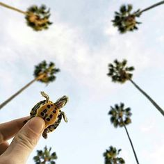 pictures of baby animals Little turtle takes on Hollywood, Los Angeles, California Cute Creatures, Beautiful Creatures, Animals Beautiful, Baby Sea Turtles, Cute Turtles, Ninja Turtles, Cute Baby Animals, Animals And Pets, Funny Animals