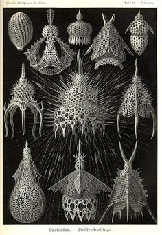 Biological illustrations from Ernst Haeckel's book 'Art Forms in Nature.'