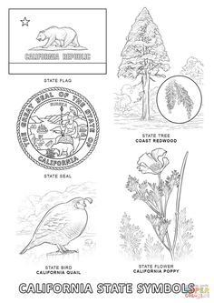 california state emblems state symbols coloring page from category select from printable crafts of cartoons nature animals bible and many more california state symbols coloring pages California Regions, California Colors, California History, California Missions, California State Tattoos, California Republic, Coloring Pages Nature, Flag Coloring Pages, Tatoo