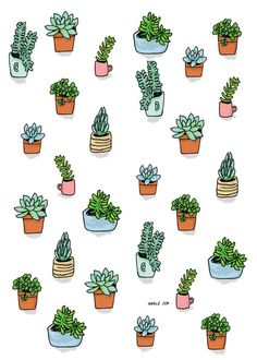 succulent illustration - Google Search More