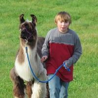 Hardwick, VT - Be Paired with Soul Mate Llama