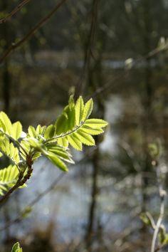 je ruikt het voorjaar