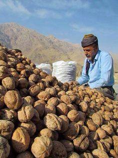 Kurdistan / Prepare fresh walnut to shop Kurdistan, Iran, People Around The World, Around The Worlds, Kurdish Food, Naher Osten, The Kurds, Asia, Working People