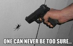 That is one big spider!