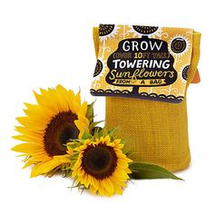Sunflower in a Bag Grow Kit: Grow your own soaring sunflowers with this easy DIY kit. Start the included seeds in the natural jute bag, and then transfer the seeding—biodegradable bag and all—to the garden. Best Friend Christmas Gifts, Homemade Christmas Gifts, Christmas Presents, Christmas Crafts, Christmas 2016, Creative Gifts, Unique Gifts, Best Secret Santa Gifts, Cheap Stocking Stuffers