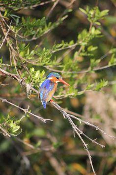 Amakhala Game Reserve has an amazing variety of bird-life. #birdlife #amakhala #southafrica