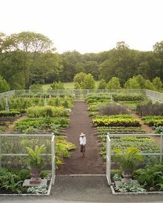 Raised beds with white trellises