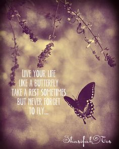 live your life like a butterfly take a rest sometimes but never forget ...
