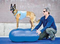 FitPAWS®-Peanut (Peanut, DVD, Pump) - Dog Fitness & Canine Rehab Equipment