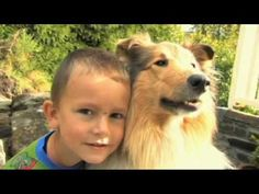 Skal vi være venner Corgi, Youtube, Animals, Musica, Norway, Corgis, Animales, Animaux, Animal