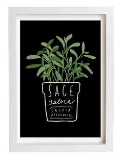 "Sage Salvia Herb Mediterranean Green Kitchen Art Print  11""x15"" - archival fine art giclée print by anek on Etsy"