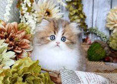 Resultado de imagem para cat kitten