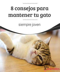 8 consejos para mantener tu gato siempre joven Para que tu gato viva su edad adulta con una gran calidad de vida, encuentra en este post algunos consejos sobre su salud y alimentación. #consejos #mascota #joven #calidaddevida