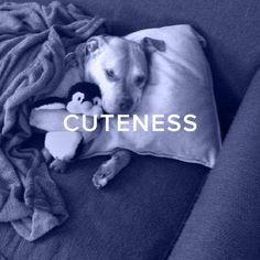 Dog Love, Cute Babies, Best Friends, Pets, Funny, Animals, Beat Friends, Bestfriends, Animales