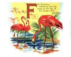 Flamingo                                                                                                                                                      Illustration flamingoes