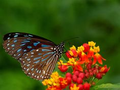 BUTTERFLY WALLPAPER | | , Butterfly DesktopBackgrounds, Butterfly Wallpapers, Butterfly ...